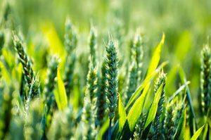 Η καλλιέργεια στην Ελλάδα