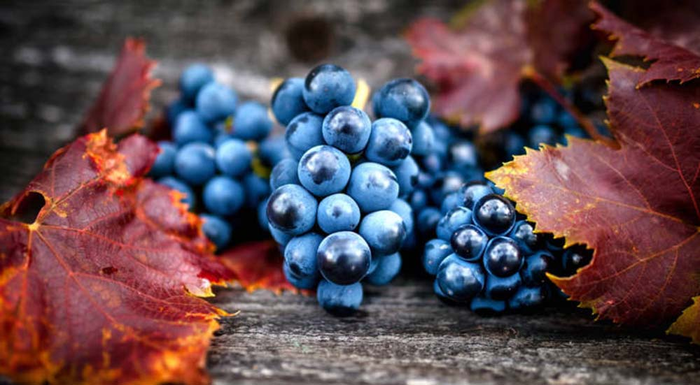 Βιολογικό κρασί